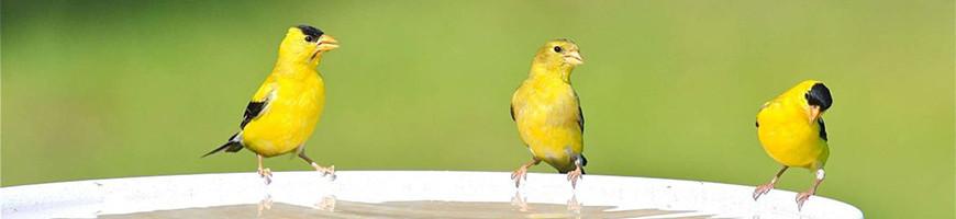Bird Feeder and Drinker for Sale   Petsfella.com