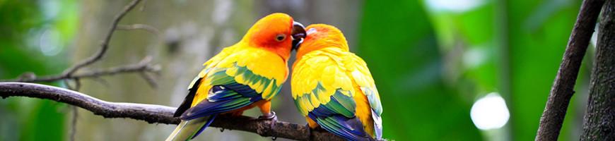 Bird Breeder Cages for Sale | Petsfella.com