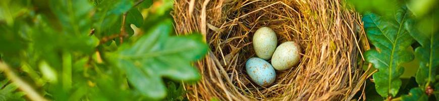 Nesting Supplies for Birds   Petsfella.com