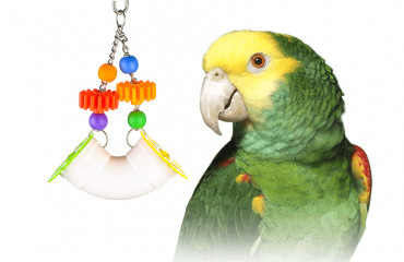 Why foraging toys are important for your parrot?