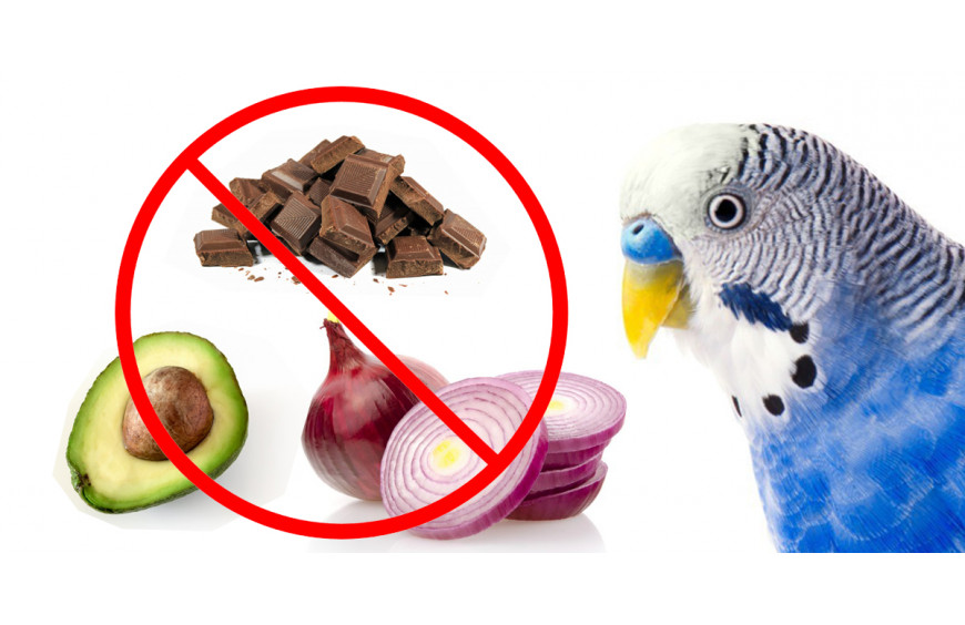 Toxic Foods Your Bird Should Never Eat
