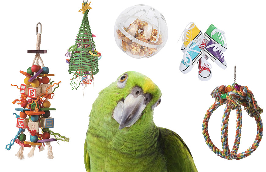 5 types toys you should have for your parrots