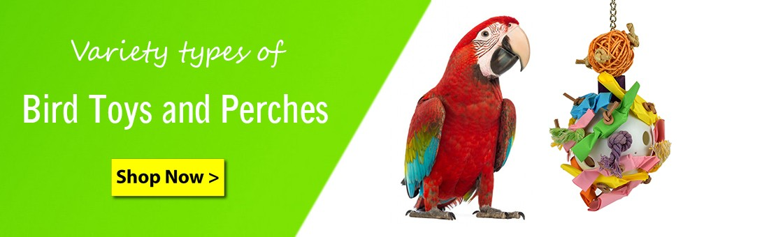 petsfella shop for bird toys